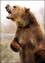 cri de l`ours