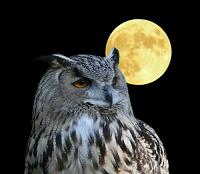 hibou, lune